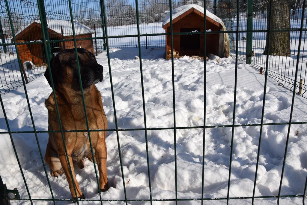 Urząd Gminy w Dzierzkowicach poszukuje właściciela psa